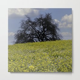 Mustard Seed Flower Fields, Fields of Flowers in Sonoma County, California Photography, Landscape, Spring Photography Metal Print