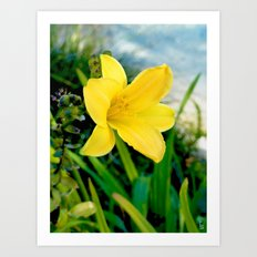 Vibrant Lily Art Print