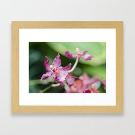Orchid Beauty (3) Framed Art Print