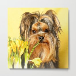 Spring Yellow Crocuses With Yorkie Puppy #decor #society6 Metal Print