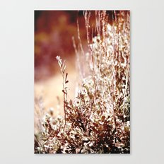 Beguiling Canvas Print