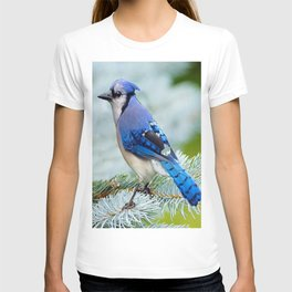 Blue Jay  in Winter Pine Tree T-shirt