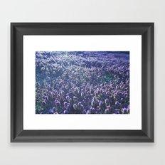 Lavendar Sunset Framed Art Print