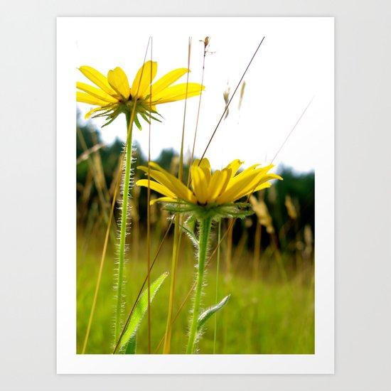 Spring Flower Art Print