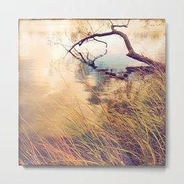 Autumn lake grasses Metal Print