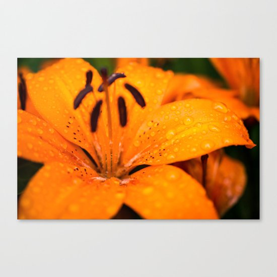 Macro Orange Flower Canvas Print