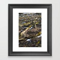 Shiny Spring Framed Art Print
