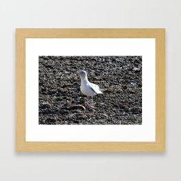 Noble Bird Framed Art Print