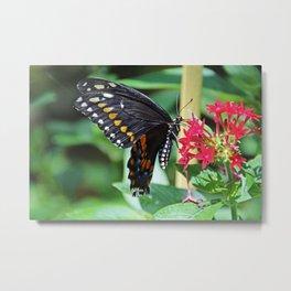 Swallowtail Sunshine Metal Print