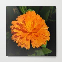 Dew on Orange Metal Print