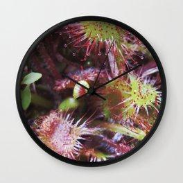 Drosera Wall Clock