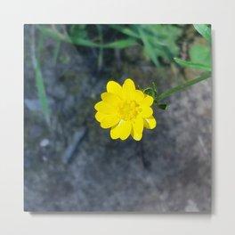 Waxy yellow flower Metal Print