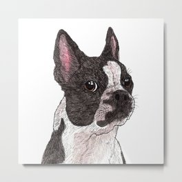 My Baby, Boston Terrier Metal Print