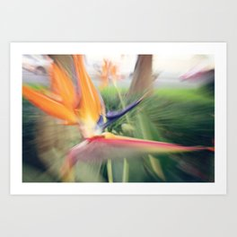 URBAN BIRD Art Print