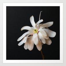 Square Star Magnolia Art Print
