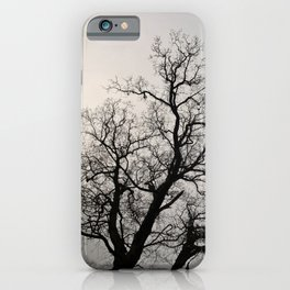 Silhouette's of Nature | Tree Silhouette | Copenhagen Denmark iPhone Case
