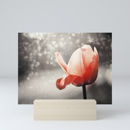 Red Tulip Flower Photography, Coral Tulips Brown Grey Black Nature Photograph Mini Art Print