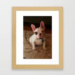 munki the frenchie Framed Art Print