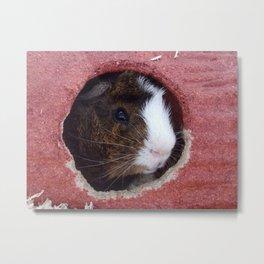 Mister Guinea Pig Metal Print