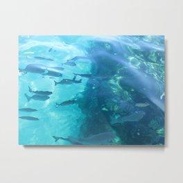 Fish Underwater Metal Print