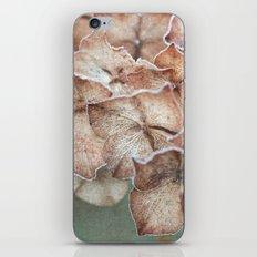 Frosty Hydrangea iPhone & iPod Skin