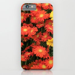 Sunflowers and Gerberas iPhone Case