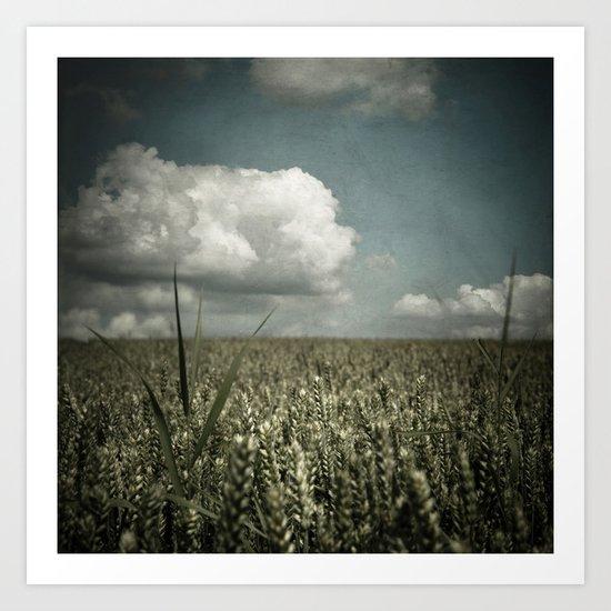 wheat field in summer Art Print