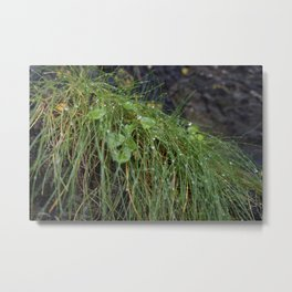 Dew Covered Coastal Plants on the Cliffs Metal Print