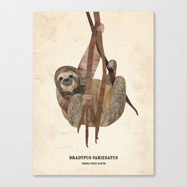 Three Toed Sloth February 2014 Print #1 Canvas Print
