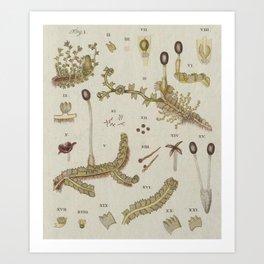Moss And Hornwort Botany Art Print