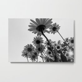 Below The Daisies Metal Print