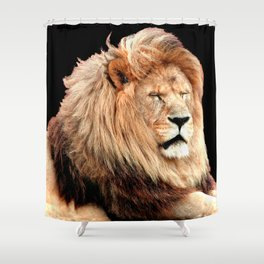 Sleepy Lion (Panthera leo) Shower Curtain