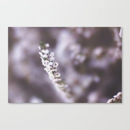 The Smallest White Flowers 02 Canvas Print