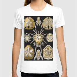 Ernst Haeckel Echinidea Sea Urchin T-shirt