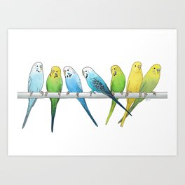 Row of Budgies Art Print