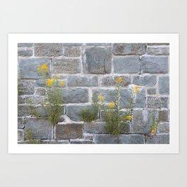Blooming on Hard Rocks Art Print