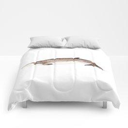 Beaked whale Comforters
