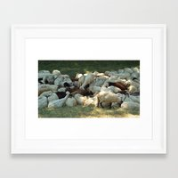 sheep Framed Art Prints featuring Sheep by Vlad&Lyubov