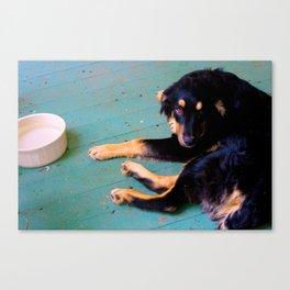 Dog | Rudy Canvas Print