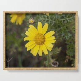 Daisy flower cu yellow Serving Tray