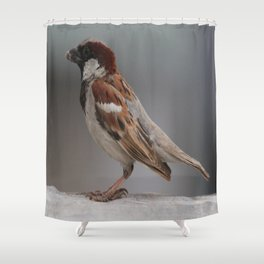 Crawl my belly Shower Curtain