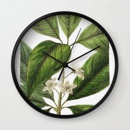 Large-leaved tristania from Edwardss Botanical Register (1829-1847) by Sydenham Edwards John Lindley Wall Clock