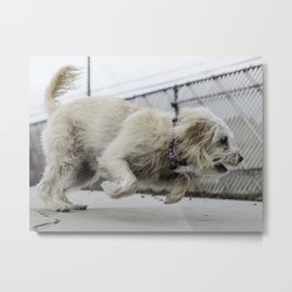 Fernie dog Metal Print