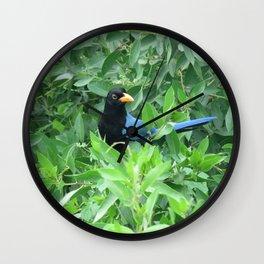 San Blas Jay Wall Clock