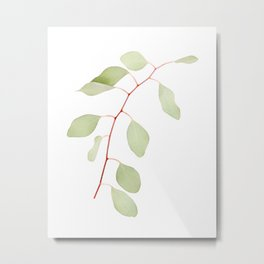 Eucalyptus Leaves II Metal Print