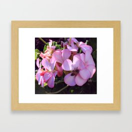 Nectar Framed Art Print