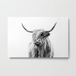 portrait of a highland cow (horizontal) Metal Print