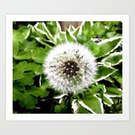 Dandelion More Than A Weed Art Print