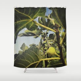the smell of the fig tree Shower Curtain