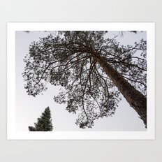 Up in the air. Into the deep forest Art Print